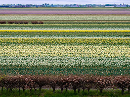 Pays-Bas : Moulins, tulipes et fromages...