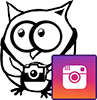Le cailloux aux hiboux instagram
