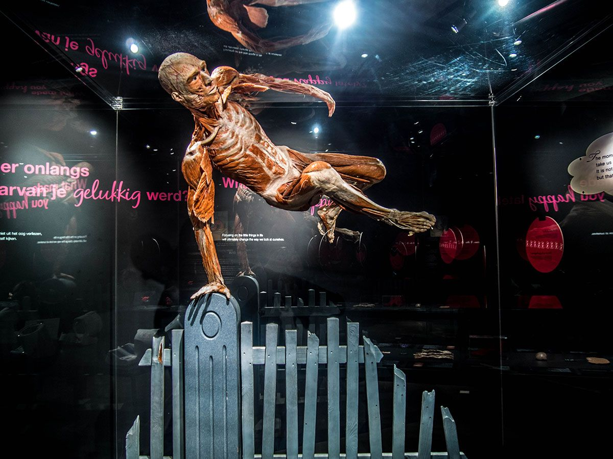 Body world amsterdam