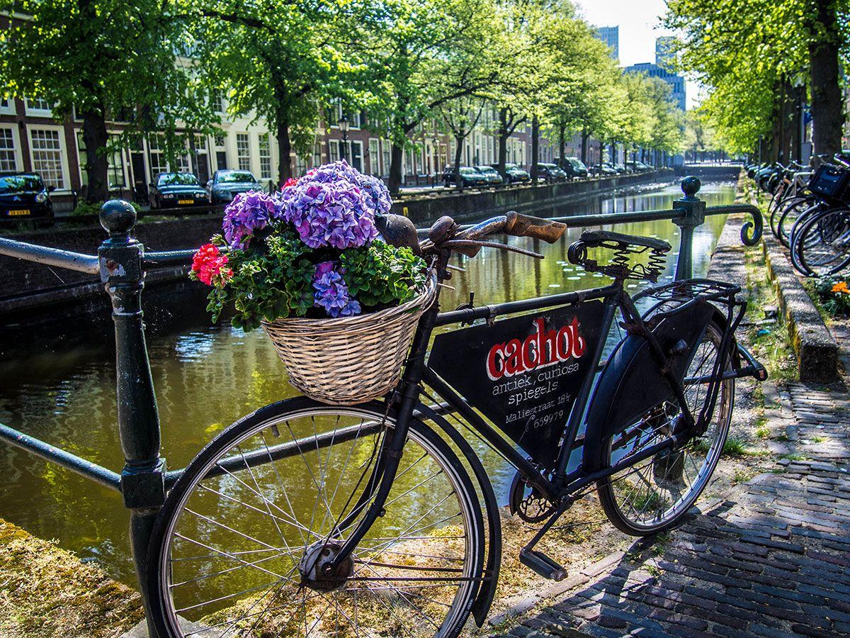 Entre amour des Pays-Bas et désillusions sur Amsterdam