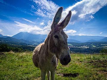 Randonnée avec un âne : sur les pas des Huguenots…